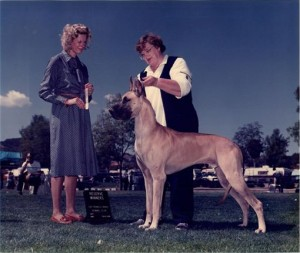 Betty Thomas showing her beloved Dane Angus
