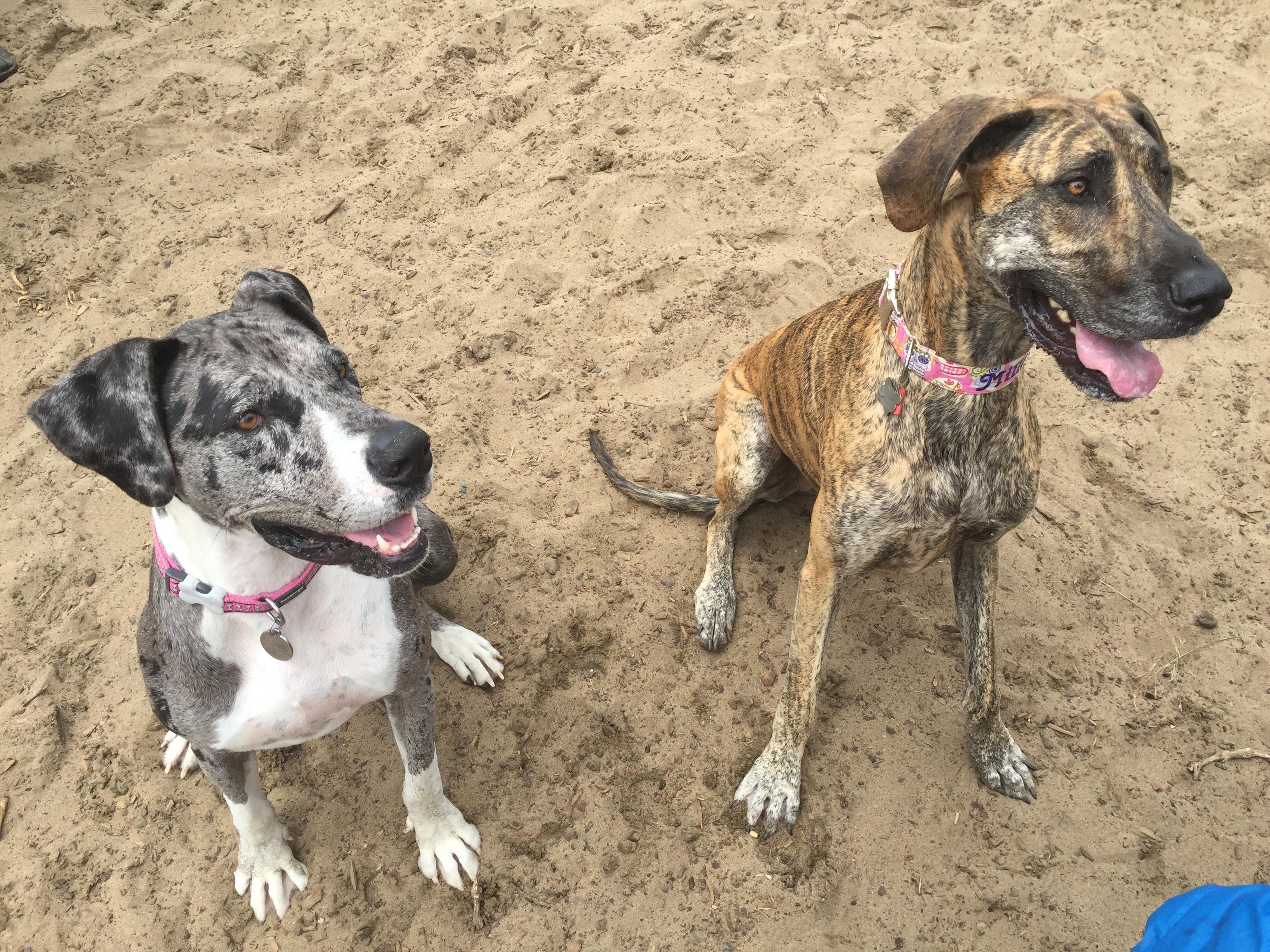 Northern California Dog Rescue Adoption