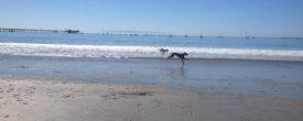 Riley At The Beach