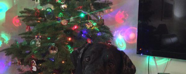 Blake at Christmas