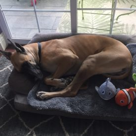 Dory – Adopted!