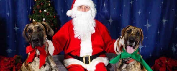 Christmas Photos Needed!!
